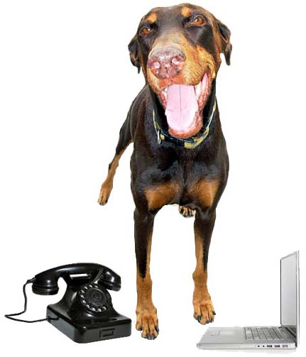 Contact Us for Dog Training Broward County