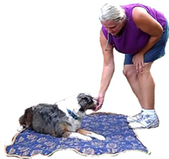 Certified Professional Dog Trainer Fort Lauderdale Broward County, Helen Verte Schwarzmann