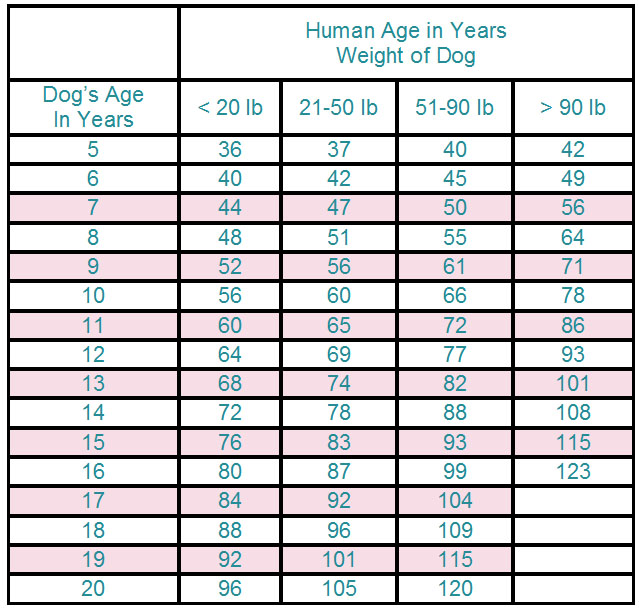 What Is Cat Years Compared To Human