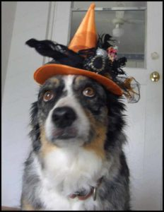 What does an Aussie Witch wish for on Halloween?